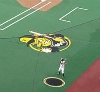 Wichita State Auctioning Turf Logos